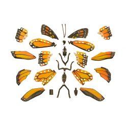 4D Puzzle Összerakható állatfigura   Pompás királylepke