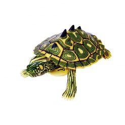 4D Puzzle Összerakható állatfigura   Térképes tarajos teknős