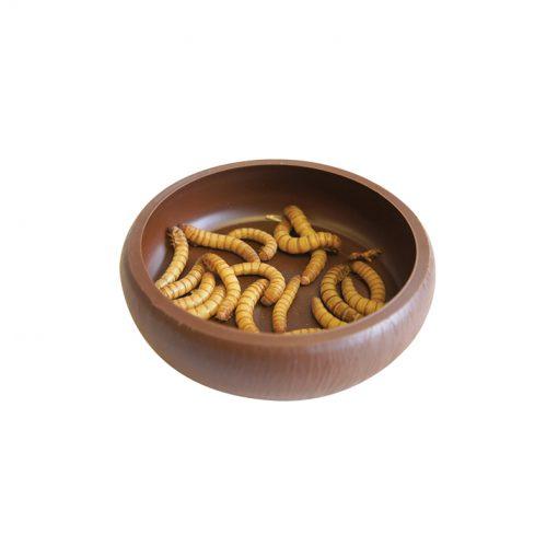 Komodo Mealworm Dish kukactál peremmel