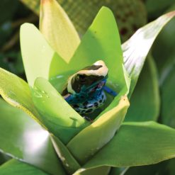 ExoTerra Smart Plant Bromelia