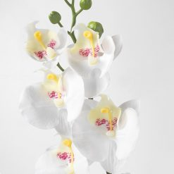 Bugs-World Fehér orchidea művirág | 50 cm