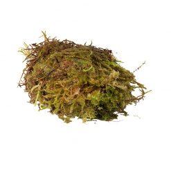 HabiStat Sphagnum Moss Élő moha