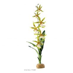 ExoTerra Rainforest Plant Orchid