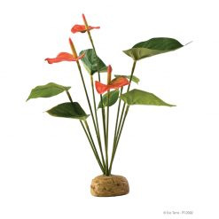 ExoTerra Rainforest Anthurium