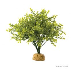 ExoTerra Rainforest Boxwood Bush