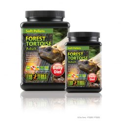 ExoTerra Forest Tortoise