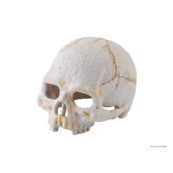 Primate-skull_high-resolution_PT2926