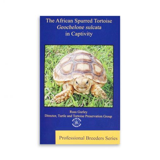 african-spurred-tortoise