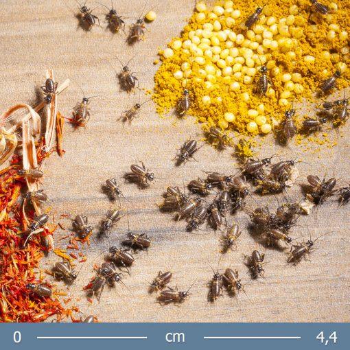 banan-tucsok-01-bugs-word