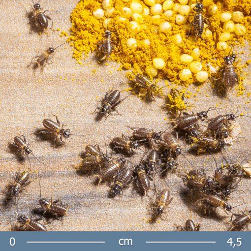 banan-tucsok-02-bugs-word