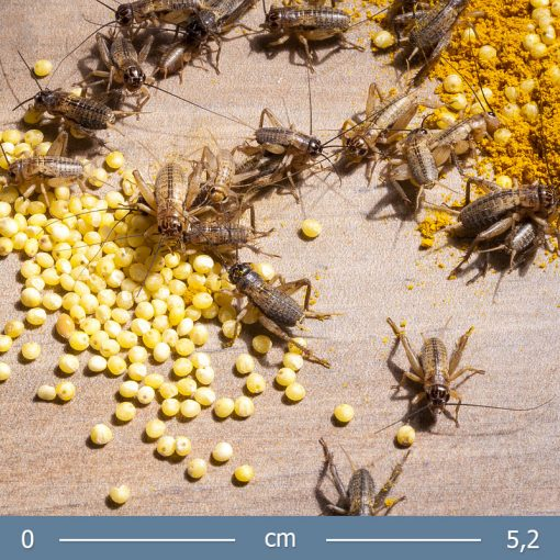 banan-tucsok-03-bugs-word