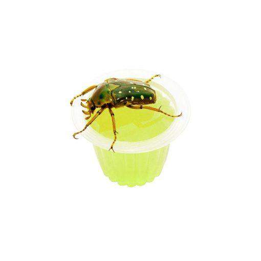 Bogárzselé-beetle-jelly-alma