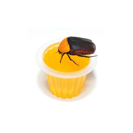 Bogárzselé - Beetle Jelly | Dinnye