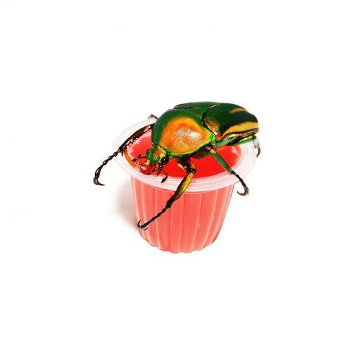 Bogárzselé – Beetle Jelly | Eper