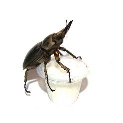 Bogárzselé - Beetle Jelly | Joghurt