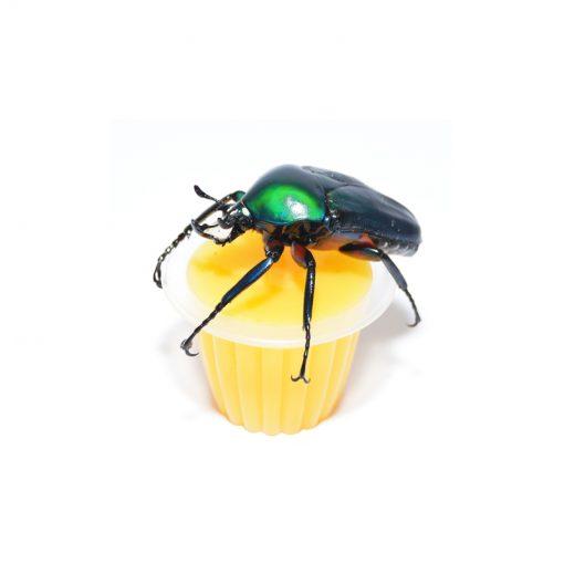Bogárzselé - Beetle Jelly | Mangó