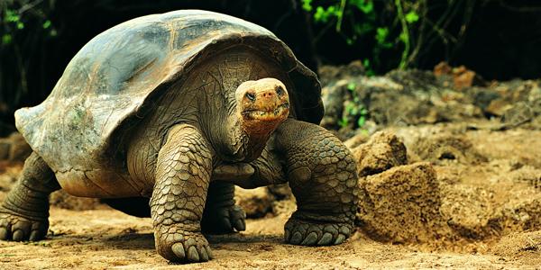 Neked is van teknősöd? Akkor érdekelhet!