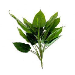 Bugs-World Philodendron Szobai futóka bokor | 50 cm