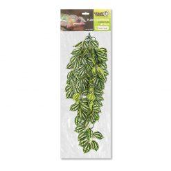 GiganTerra Pilea Természethű futónövény