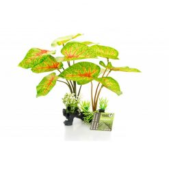 GiganTerra Caladium talpas műnövény