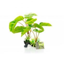 GiganTerra Philodendron erubescens talpas műnövény