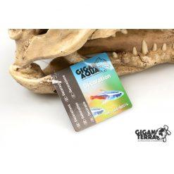 GiganTerra Crocodile Skull Krokodil koponya