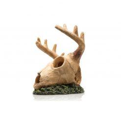 GiganTerra Moose Skull Jávorszarvas koponya