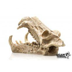 GiganTerra Tiger Skull Kardfogú tigris koponya