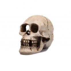 GiganTerra Human Skull Koponya dekoráció és búvóhely | 16 cm