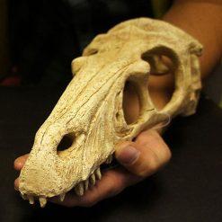 Komodo Raptor Skull dinó koponya | L