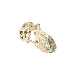 Komodo T-Rex Skull dinó koponya   M