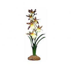 Komodo Spider Orchid Pókorchidea művirág