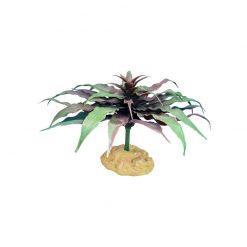 Komodo Star Cactus Csillagkaktusz műnövény