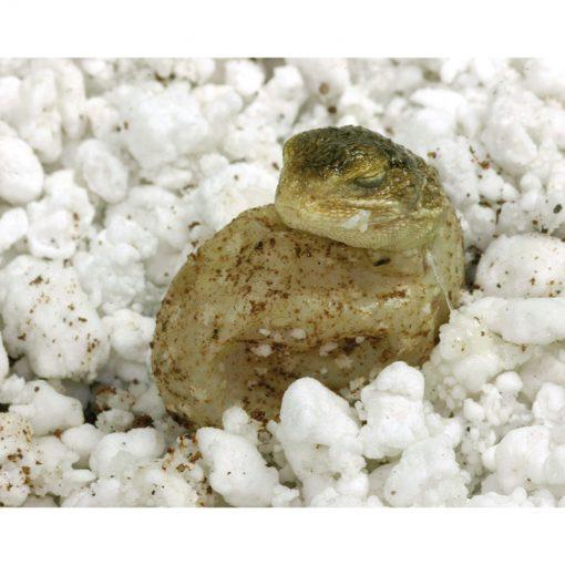 Lucky Reptile HatchRite Használatra kész keltetőközeg | 2L