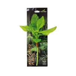 Reptiles-Planet Exotic Plant Musa basjoo Japán banán műnövény