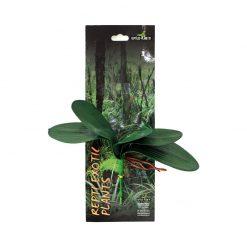 Reptiles-Planet Exotic Plant Phalaenopsis amabilis Orchidea műnövény