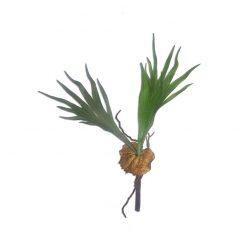 Bugs-World Elkhorn Fern Szarvasagancs páfrány műnövény