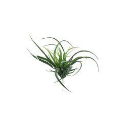 Bugs-World Tillandsia természetes műnövény
