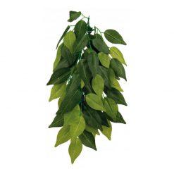 Trixie Hanging Plant Ficus
