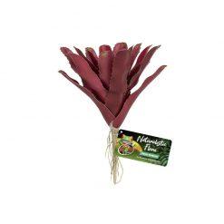 Zoomed Fireball Bromeliad Természethű bromélia műnövény