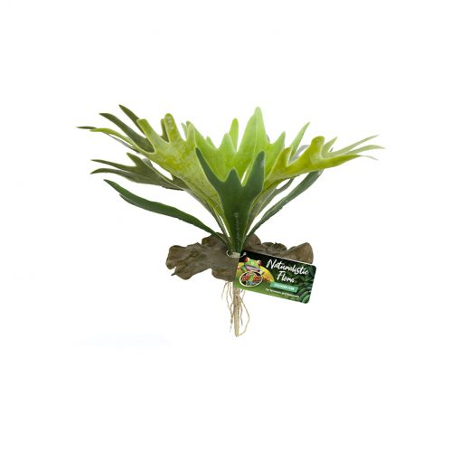 Zoomed Staghorn Fern Szarvasagancs páfrány műnövény